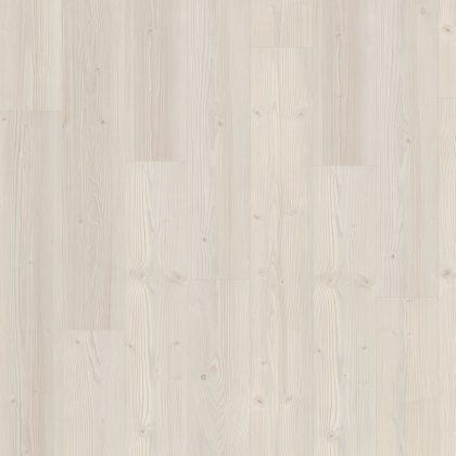 EPL028 Borovice Inverey bílá V4